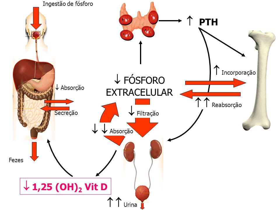 Ingestão de fósforo Fezes Absorção Secreção PTH 1,25 (OH) 2 Vit D Incorporação FÓSFORO EXTRACELULAR Absorção Urina Reabsorção Filtração