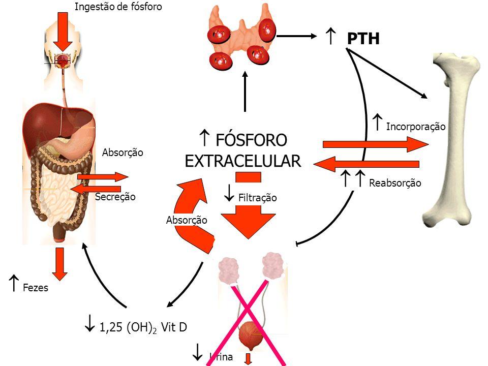 Ingestão de fósforo Fezes Absorção Secreção PTH 1,25 (OH) 2 Vit D Incorporação FÓSFORO EXTRACELULAR Absorção Urina Filtração Reabsorção