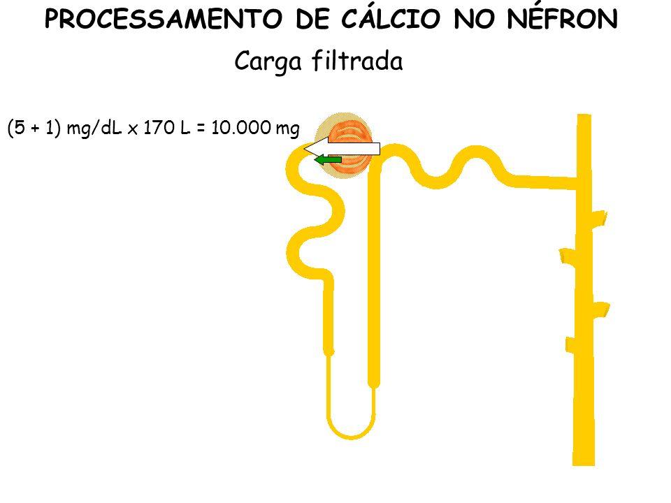 (5 + 1) mg/dL x 170 L = 10.000 mg PROCESSAMENTO DE CÁLCIO NO NÉFRON Carga filtrada