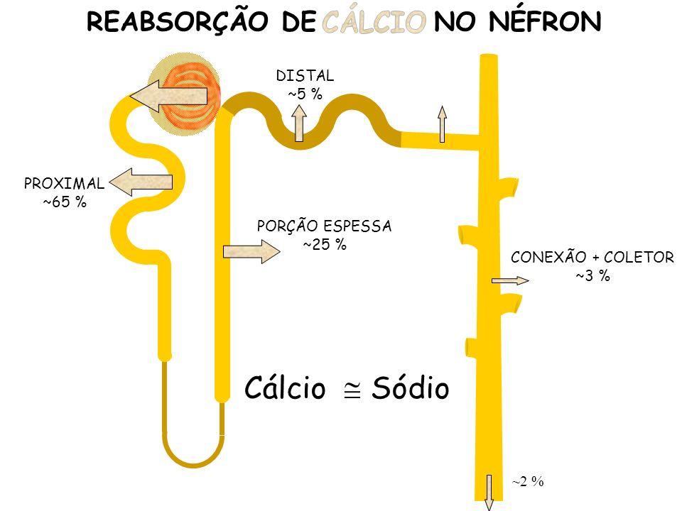 CONEXÃO + COLETOR ~3 % REABSORÇÃO DE SÓDIO NO NÉFRON PROXIMAL ~65 % PORÇÃO ESPESSA ~25 % DISTAL ~5 % ~2 % Cálcio Sódio