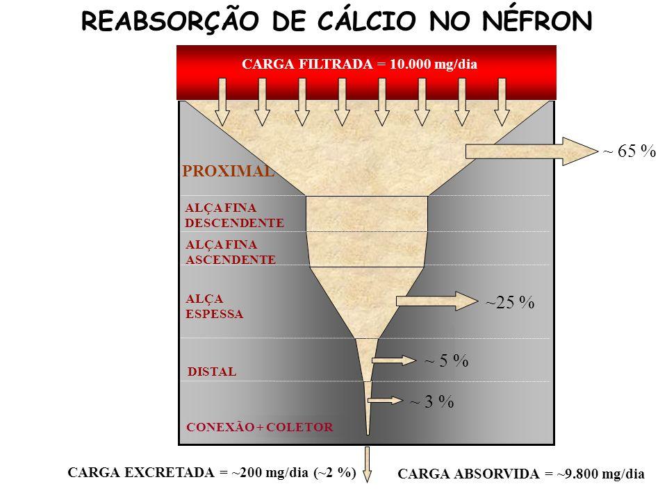 DISTAL ALÇA FINA DESCENDENTE ALÇA ESPESSA COLETOR ALÇA FINA ASCENDENTE PROXIMAL CARGA FILTRADA = 10.000 mg/dia CARGA EXCRETADA = ~200 mg/dia (~2 %) ~