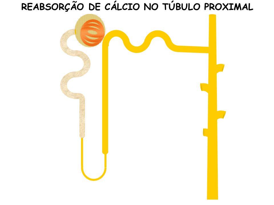 REABSORÇÃO DE CÁLCIO NO TÚBULO PROXIMAL