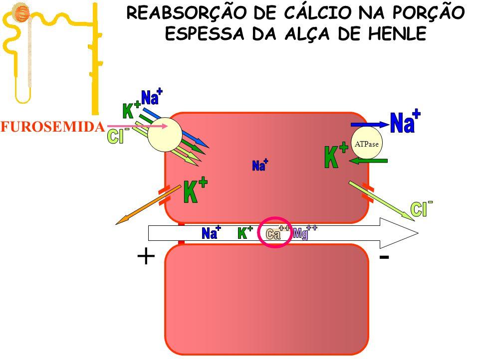 ATPase + - FUROSEMIDA REABSORÇÃO DE CÁLCIO NA PORÇÃO ESPESSA DA ALÇA DE HENLE