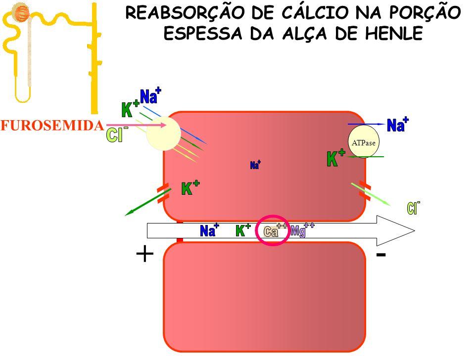 ATPase FUROSEMIDA + - REABSORÇÃO DE CÁLCIO NA PORÇÃO ESPESSA DA ALÇA DE HENLE