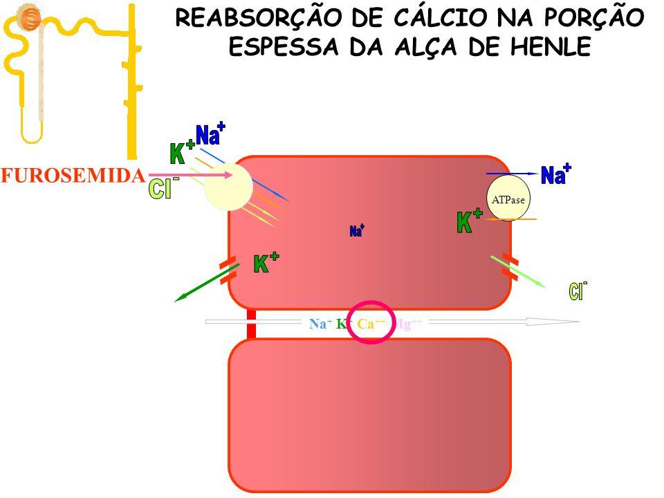 ATPase + - FUROSEMIDA Na + K + Ca ++ Mg ++ REABSORÇÃO DE CÁLCIO NA PORÇÃO ESPESSA DA ALÇA DE HENLE