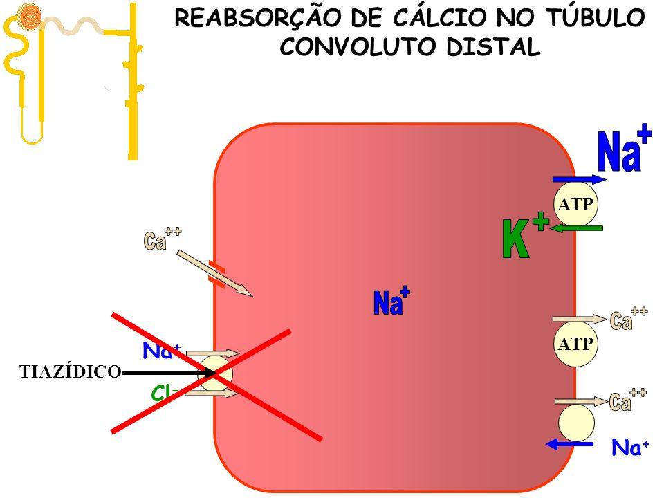 Filtração 10.000 mg/dia ATP Na + Cl - Na + ATP REABSORÇÃO DE CÁLCIO NO TÚBULO CONVOLUTO DISTAL TIAZÍDICO