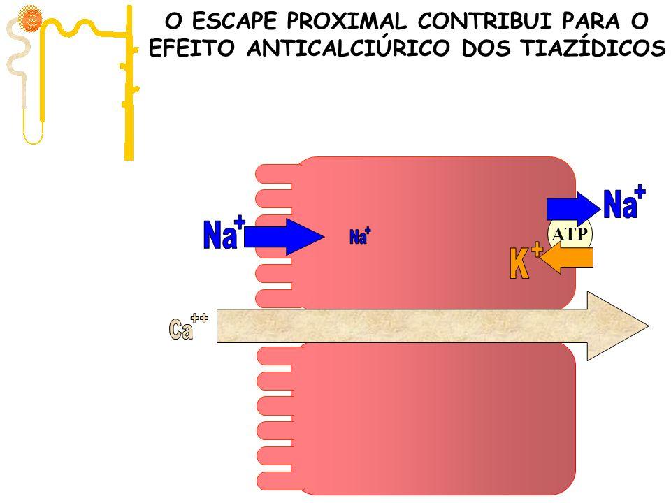 Ca Filtração 10.000 mg/dia ATP O ESCAPE PROXIMAL CONTRIBUI PARA O EFEITO ANTICALCIÚRICO DOS TIAZÍDICOS