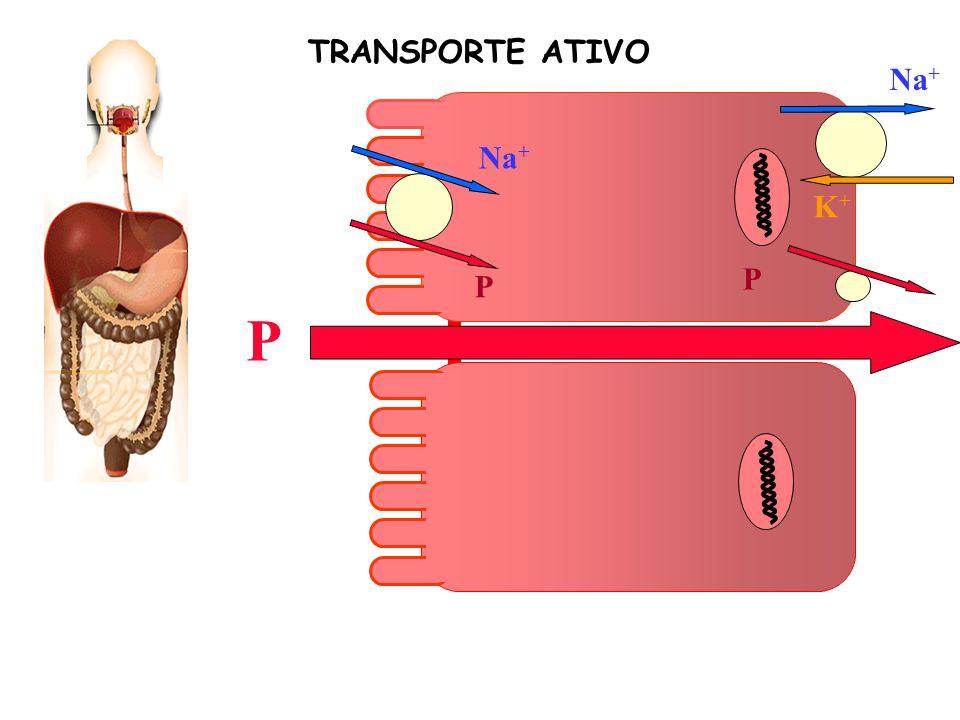 P K+K+ Na + P P TRANSPORTE ATIVO