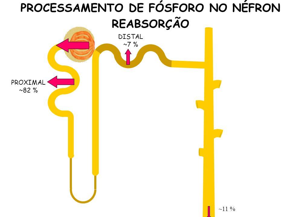 PROXIMAL ~82 % DISTAL ~7 % ~11 % PROCESSAMENTO DE FÓSFORO NO NÉFRON REABSORÇÃO