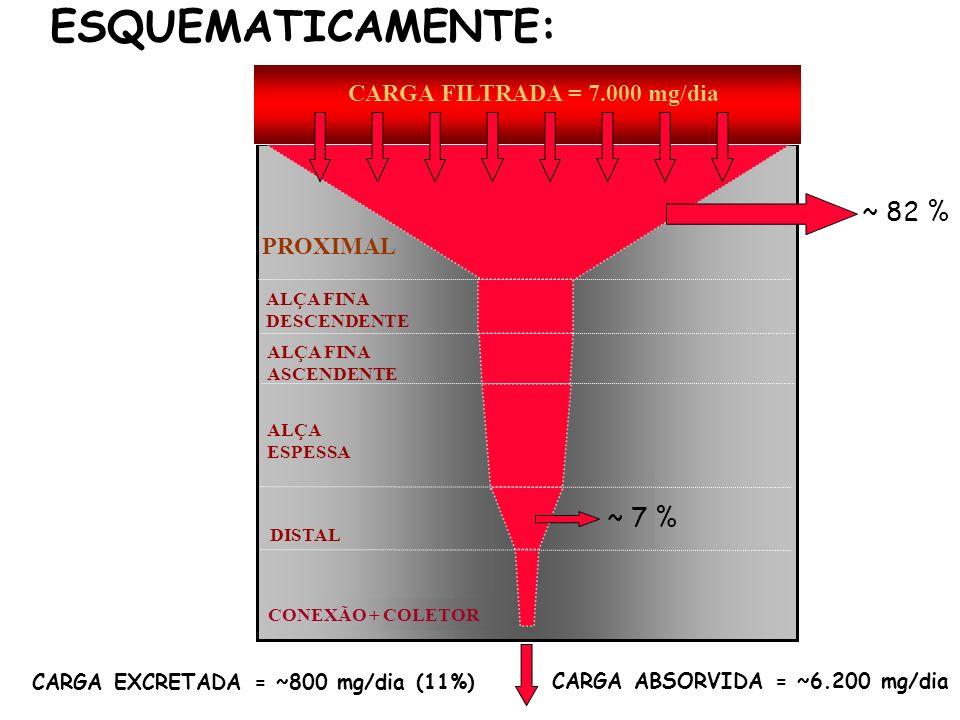 DISTAL ALÇA FINA DESCENDENTE ALÇA ESPESSA ALÇA FINA ASCENDENTE PROXIMAL CARGA FILTRADA = 7.000 mg/dia CARGA EXCRETADA = ~800 mg/dia (11%) ~ 82 % ~ 7 %