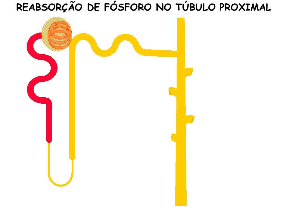 REABSORÇÃO DE FÓSFORO NO TÚBULO PROXIMAL