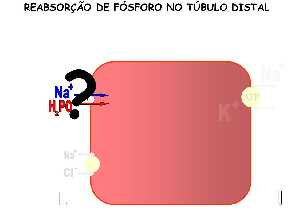 ATP REABSORÇÃO DE FÓSFORO NO TÚBULO DISTAL ?