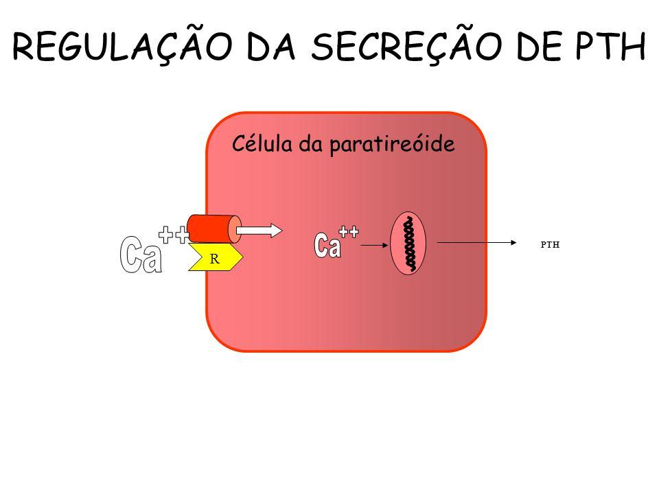 R PTH Célula da paratireóide REGULAÇÃO DA SECREÇÃO DE PTH