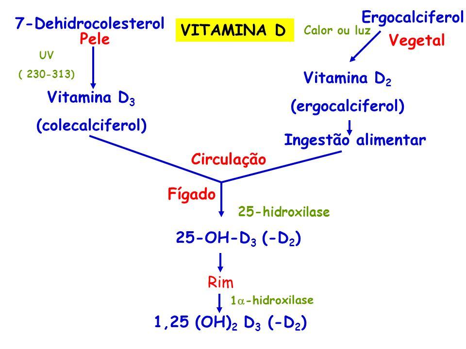 7-Dehidrocolesterol Pele UV ( 230-313) Vitamina D 3 (colecalciferol) Ergocalciferol Calor ou luz Vitamina D 2 (ergocalciferol) Ingestão alimentar Circ