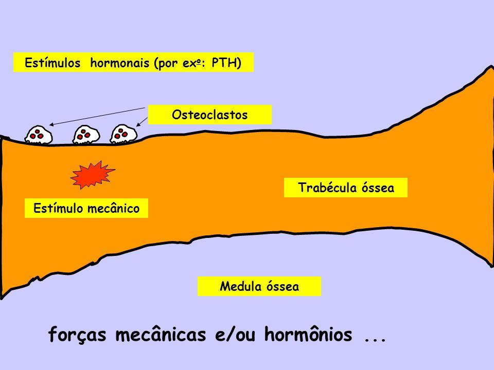 Medula óssea Trabécula óssea Estímulo mecânico Estímulos hormonais (por ex o : PTH) Osteoclastos forças mecânicas e/ou hormônios...