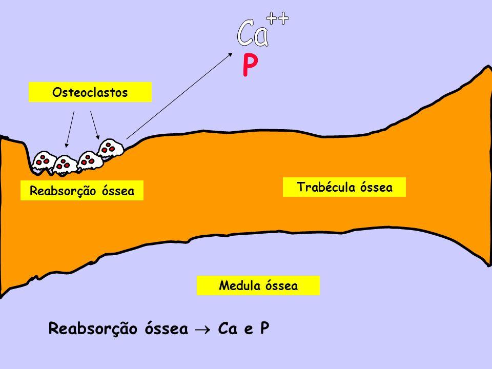 Medula óssea Trabécula óssea Osteoclastos Reabsorção óssea Reabsorção óssea Ca e P P