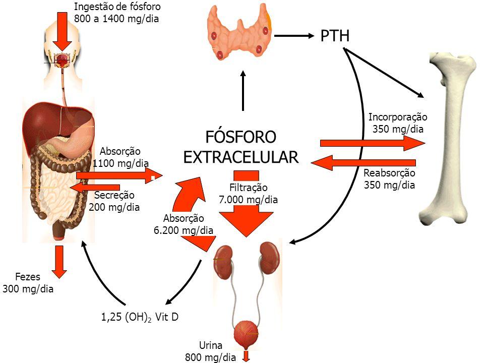 Ingestão de fósforo 800 a 1400 mg/dia Fezes 300 mg/dia Absorção 1100 mg/dia Secreção 200 mg/dia PTH Reabsorção 350 mg/dia 1,25 (OH) 2 Vit D Incorporaç