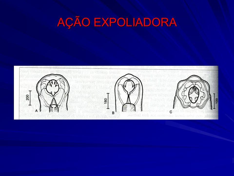 AÇÃO EXPOLIADORA