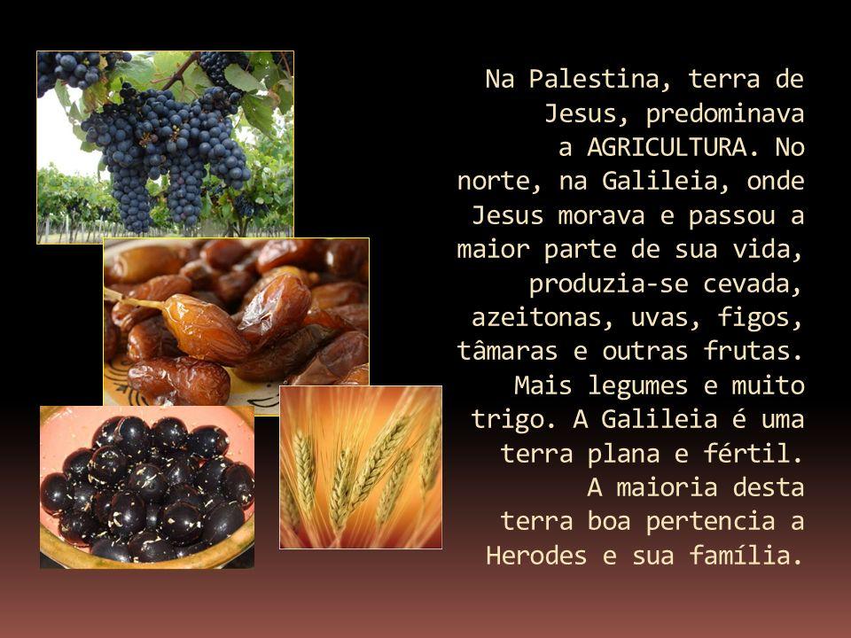 Na Palestina, terra de Jesus, predominava a AGRICULTURA. No norte, na Galileia, onde Jesus morava e passou a maior parte de sua vida, produzia-se ceva