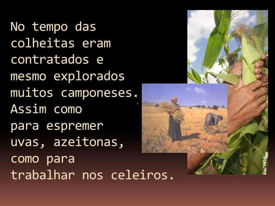 No tempo das colheitas eram contratados e mesmo explorados muitos camponeses. Assim como para espremer uvas, azeitonas, como para trabalhar nos celeir