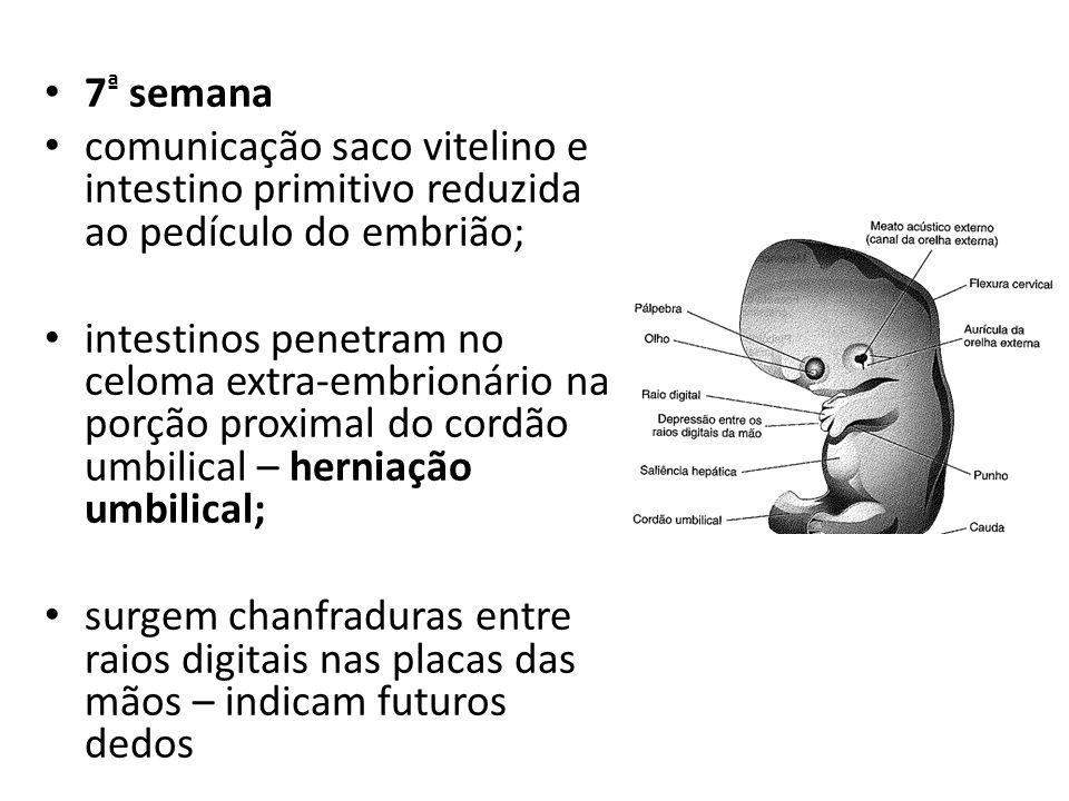 7 ª semana comunicação saco vitelino e intestino primitivo reduzida ao pedículo do embrião; intestinos penetram no celoma extra-embrionário na porção