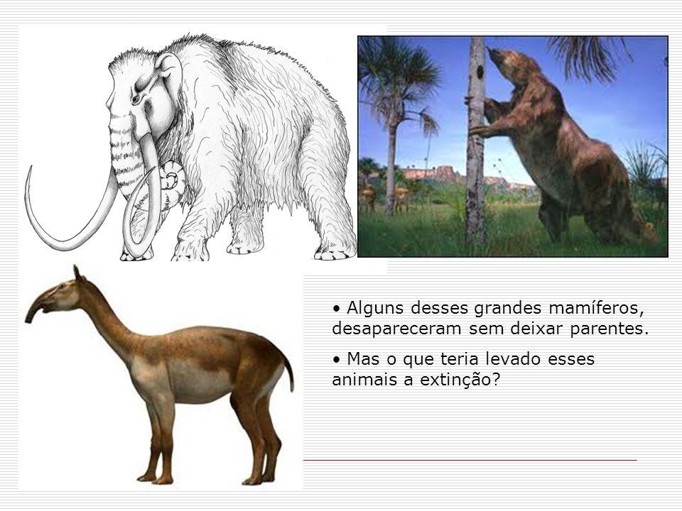 Alguns desses grandes mamíferos, desapareceram sem deixar parentes. Mas o que teria levado esses animais a extinção?