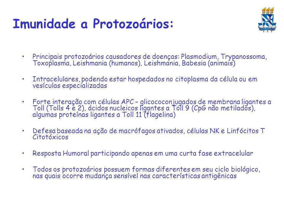 Imunidade a Protozoários: Principais protozoários causadores de doenças: Plasmodium, Trypanossoma, Toxoplasma, Leishmania (humanos), Leishmania, Babes