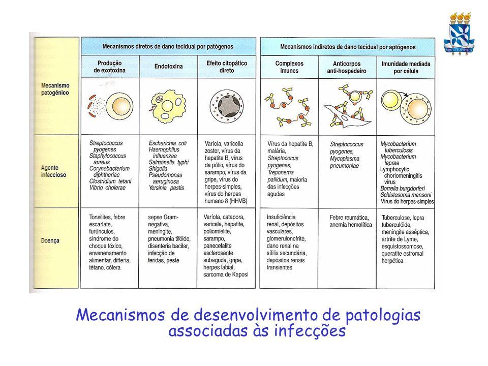Imunidade a Helmintos: Baseada principalmente em mecanismos desencadeados por Linfócitos T do Tipo Th2 Importantíssima a ação de eosinófilos e de IgE – Os eosinófilos reconhecem a IgE ligada a membrana de helmintos através de seus receptores FCe, secretando nesse momento enzimas que destroem diretamente os parasitas Ativação dos Eosinófilos por IL-5, Troca de Isotipo para IgE em Linf.