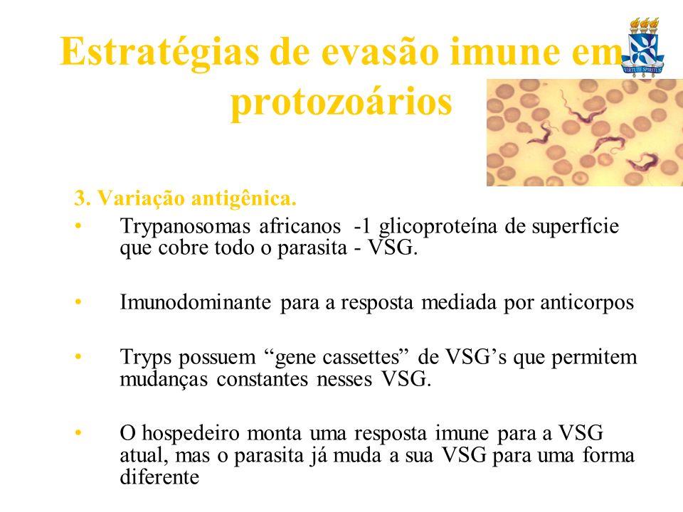 Estratégias de evasão imune em protozoários 3. Variação antigênica. Trypanosomas africanos -1 glicoproteína de superfície que cobre todo o parasita -