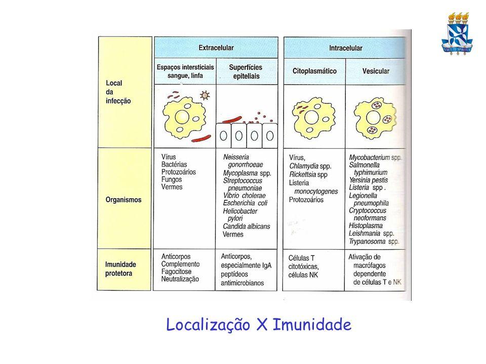 Respostas Imunológicas de Vertebrados a Helmintos A grande maioria extracelular e muitos grandes para a fagocitose.