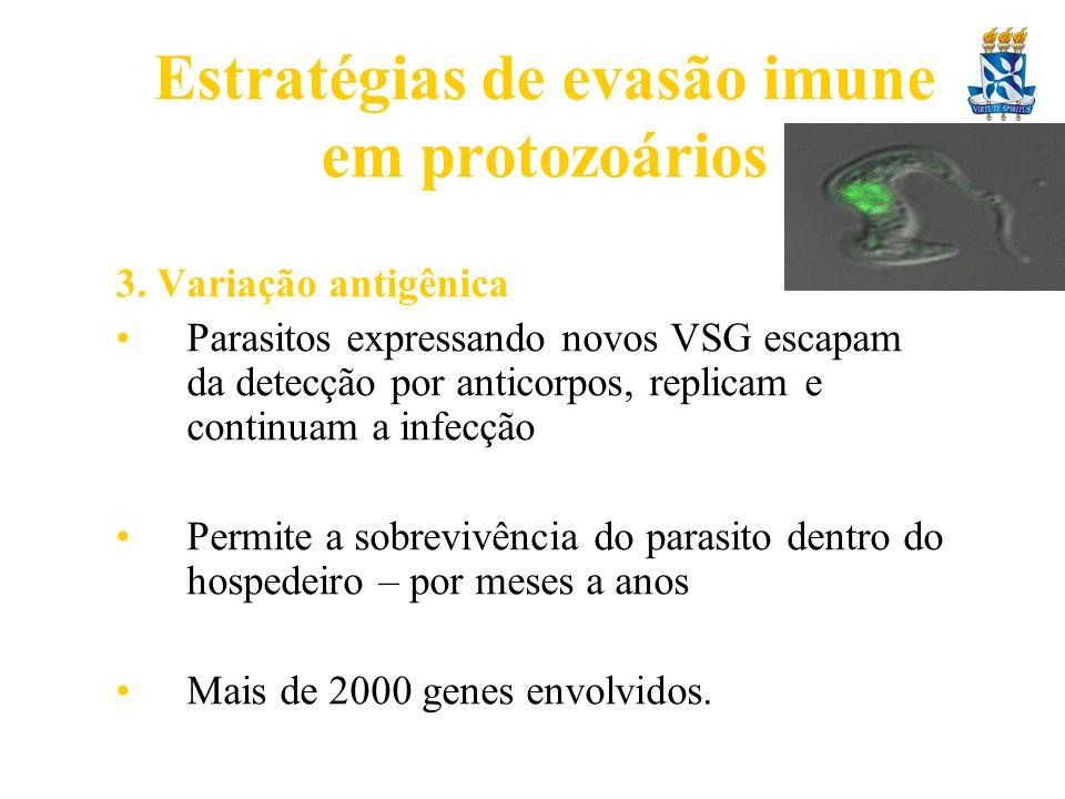 Estratégias de evasão imune em protozoários 3. Variação antigênica Parasitos expressando novos VSG escapam da detecção por anticorpos, replicam e cont