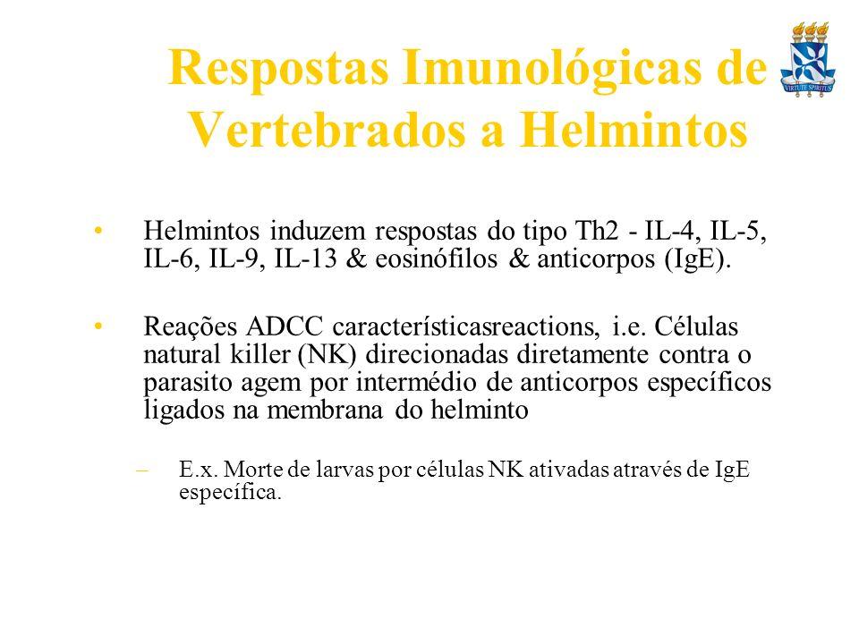 Respostas Imunológicas de Vertebrados a Helmintos Helmintos induzem respostas do tipo Th2 - IL-4, IL-5, IL-6, IL-9, IL-13 & eosinófilos & anticorpos (