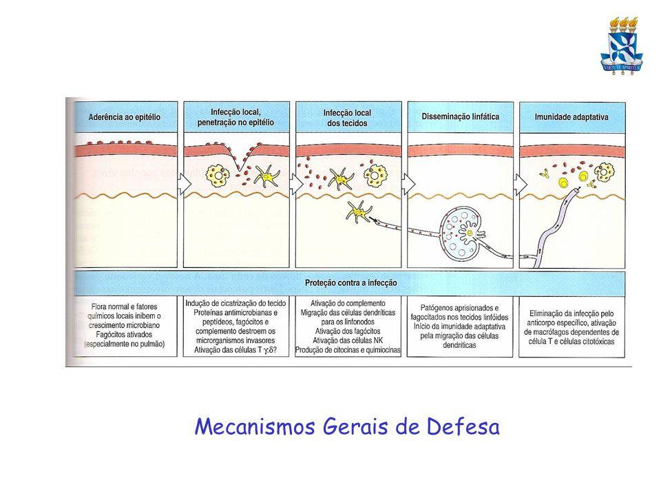 Imunidade a Bactérias Extracelulares: Principais mecanismos da Imunidade Inata: ativação do complemento, fagocitose e resposta inflamatória – ativadores potentes de Toll na membrana de diversos patógenos (LPS) Imunidade Adaptativa: Resposta Imune Humoral – não somente a antígenos de membrana, mas também dirigida a toxinas produzidas pelas bactérias Opsonização – Neutralização – Ativação de Complemento - Fagocitose Mecanismos imunes deletérios – Choque Séptico, coagulação intravascular disseminada Superantígenos Auto-anticorpos induzidos por antígenos bacterianos – Estreptococos e miocardites Mecanismos de evasão – variação antigênica, cobertura de antígenos self