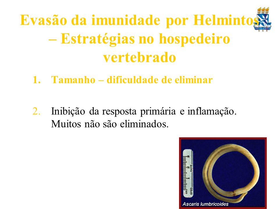 Evasão da imunidade por Helmintos – Estratégias no hospedeiro vertebrado 1.Tamanho – dificuldade de eliminar 2.Inibição da resposta primária e inflama