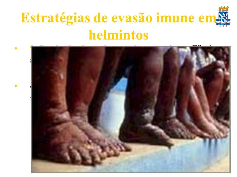 Estratégias de evasão imune em helmintos 9. Produção de enzimas pelos parasitas – Filarias secretam enzimas anti-oxidantes e.g. glutationa peroxidase