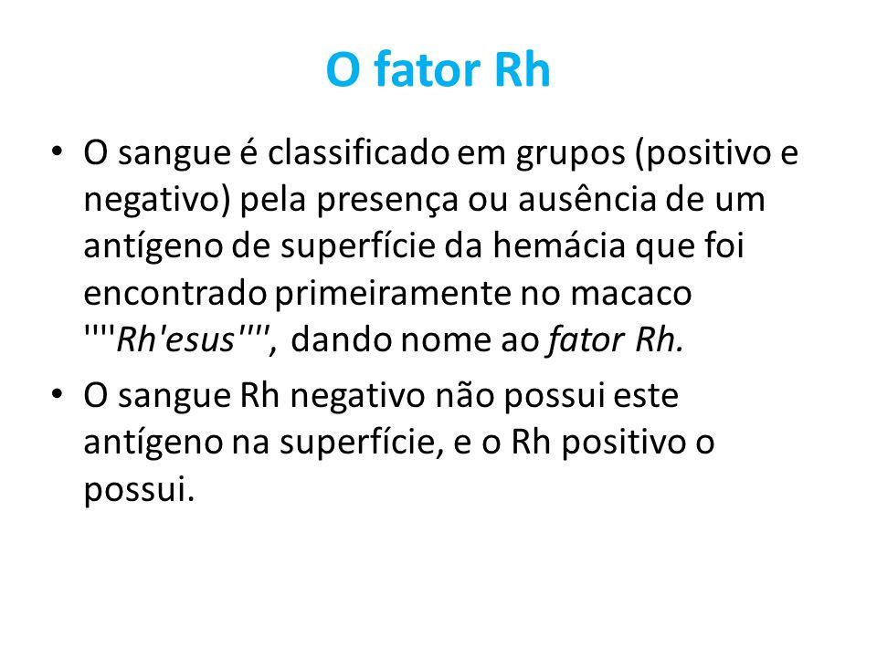 O fator Rh O sangue é classificado em grupos (positivo e negativo) pela presença ou ausência de um antígeno de superfície da hemácia que foi encontrad