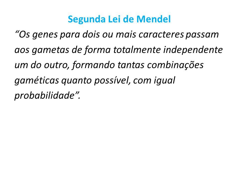 Segunda Lei de Mendel Os genes para dois ou mais caracteres passam aos gametas de forma totalmente independente um do outro, formando tantas combinaçõ