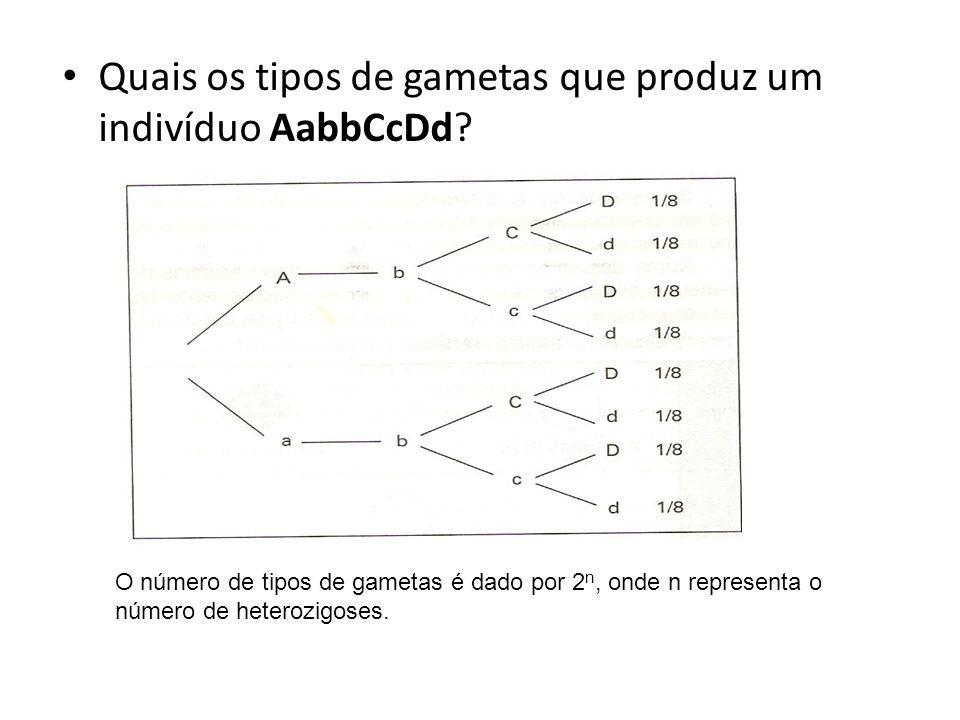 Quais os tipos de gametas que produz um indivíduo AabbCcDd? O número de tipos de gametas é dado por 2 n, onde n representa o número de heterozigoses.