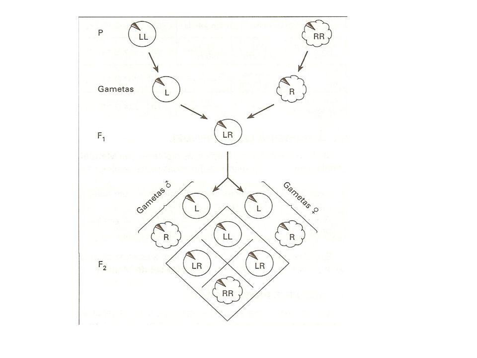 A regra do E A probabilidade da ocorrência simultânea de dos eventos independentes, isto é, a probabilidade da ocorrência de um e outro, é obtida pelo produto das probabilidades isoladas Qual a probabilidade de, ao jogarmos um dado e uma moeda, sair ao mesmo tempo cara e 4?