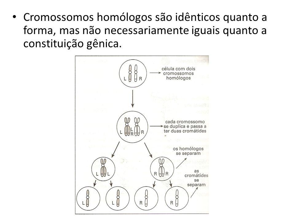 Parte-se da hipótese de que todos os genes se localizam nos cromossomos.