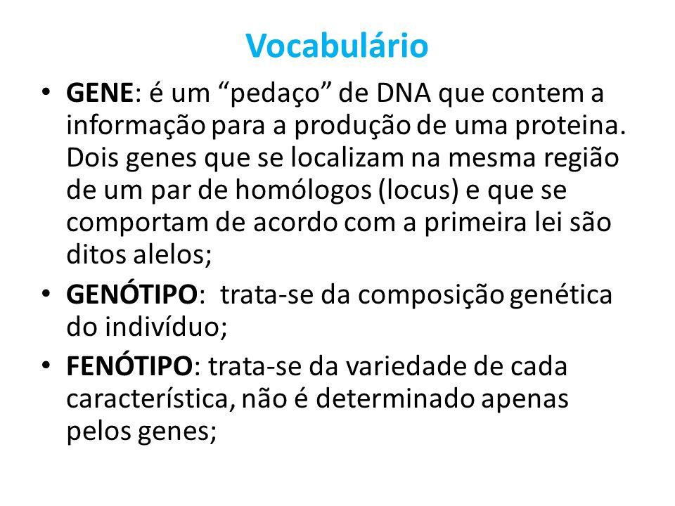 Vocabulário GENE: é um pedaço de DNA que contem a informação para a produção de uma proteina. Dois genes que se localizam na mesma região de um par de