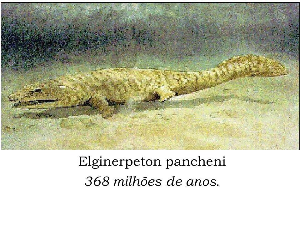 Elginerpeton pancheni 368 milhões de anos.