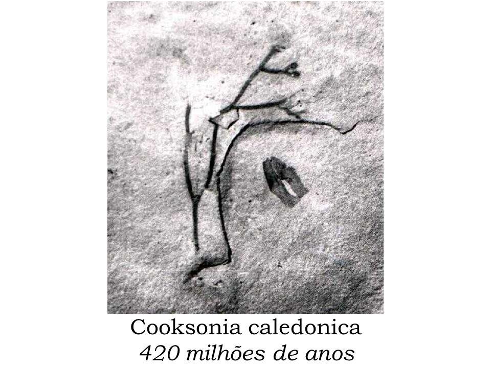 Cooksonia caledonica 420 milhões de anos