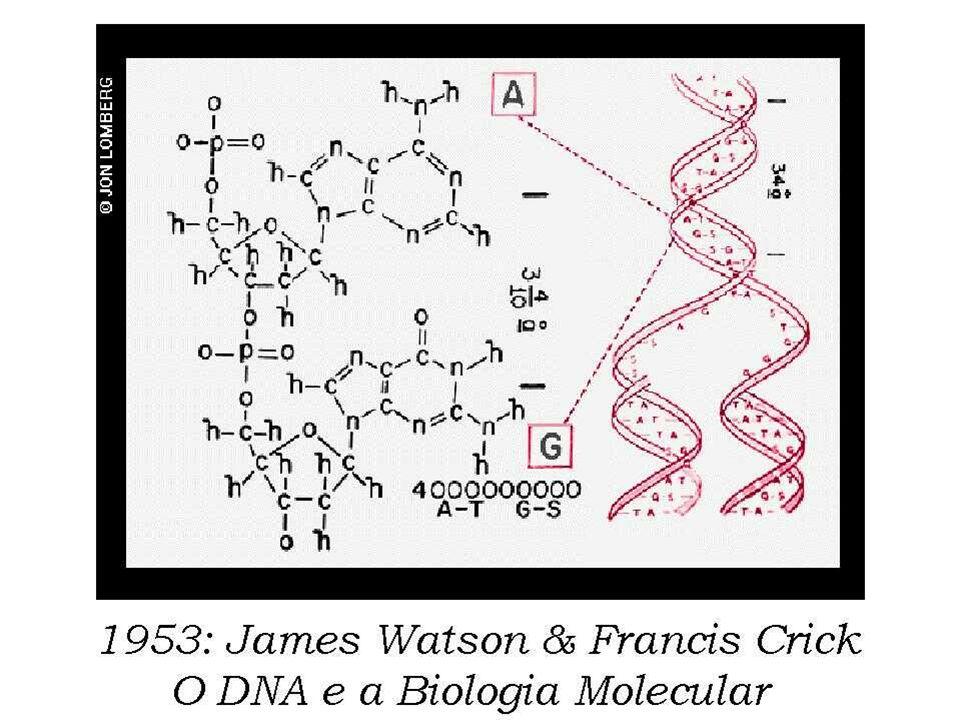 1953: James Watson & Francis Crick O DNA e a Biologia Molecular