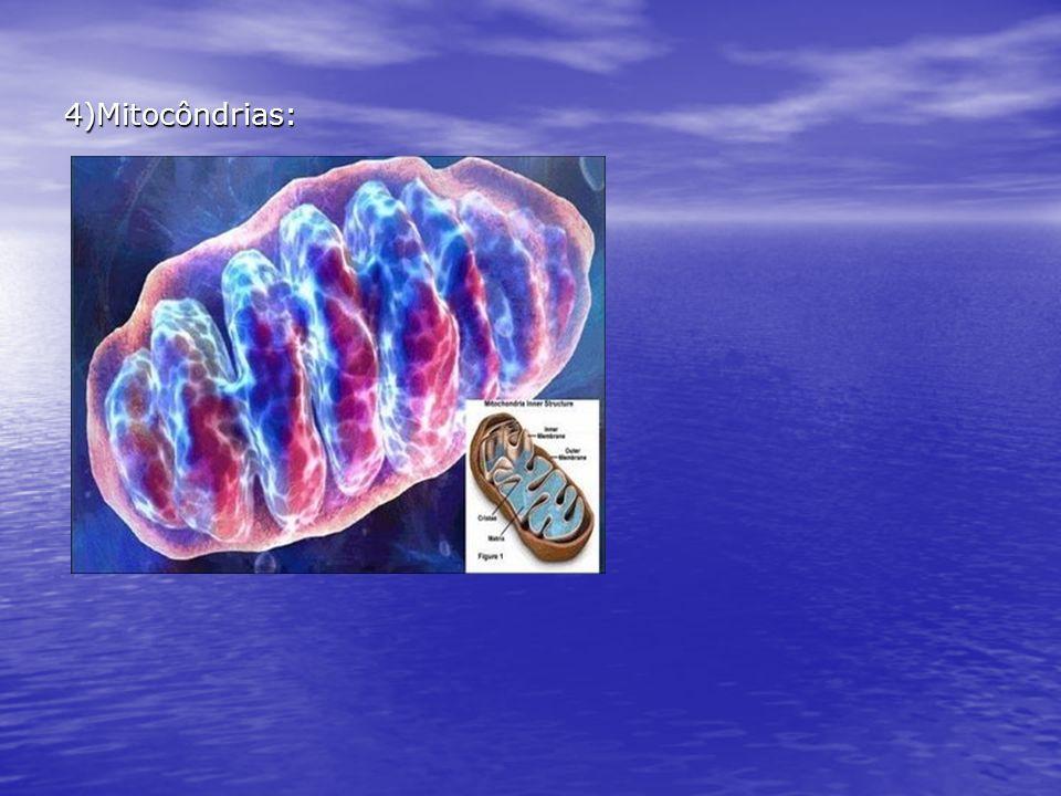 4)Mitocôndrias: