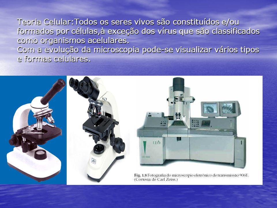 Técnicas de preparação e observação celular: 1) Coloração: Usam-se corantes específicos afim de se observar algumas estruturas celulares.