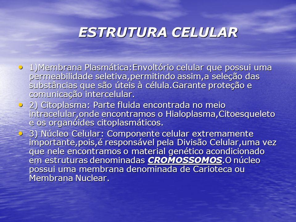 ESTRUTURA CELULAR ESTRUTURA CELULAR 1)Membrana Plasmática:Envoltório celular que possui uma permeabilidade seletiva,permitindo assim,a seleção das sub