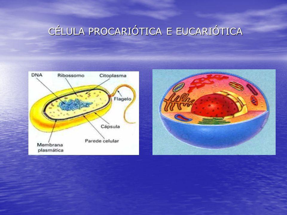 CÉLULA PROCARIÓTICA E EUCARIÓTICA CÉLULA PROCARIÓTICA E EUCARIÓTICA