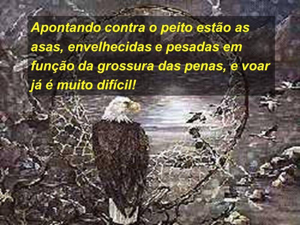 Então, a águia só tem duas alternativas: Aguardar a morte, ou Enfrentar um dolorido processo de renovação que irá durar 150 dias.