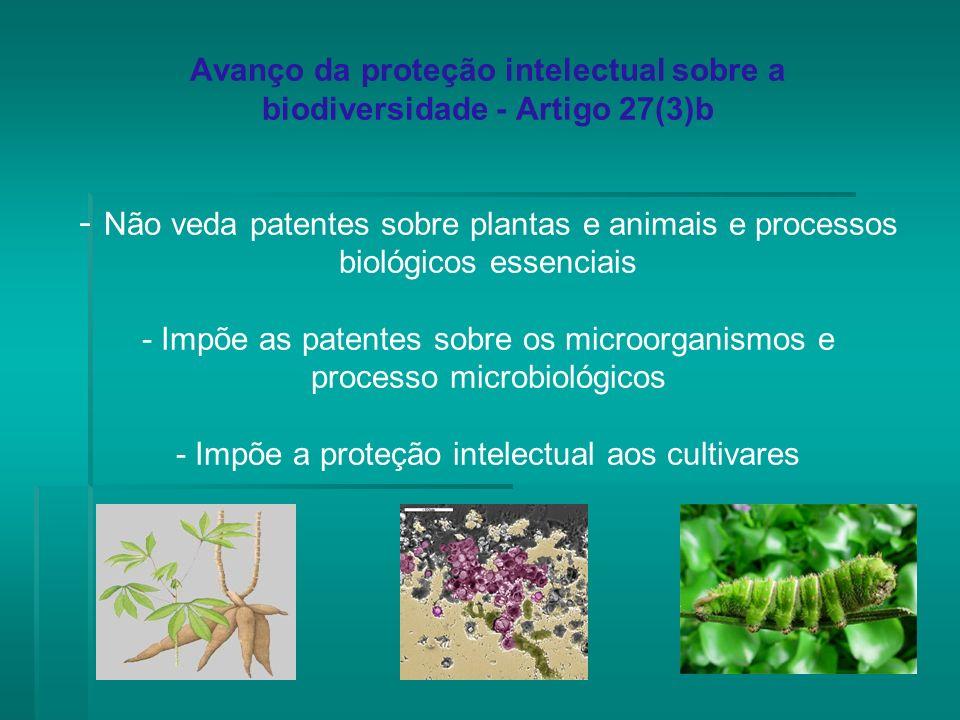Avanço da proteção intelectual sobre a biodiversidade - Artigo 27(3)b - Não veda patentes sobre plantas e animais e processos biológicos essenciais -